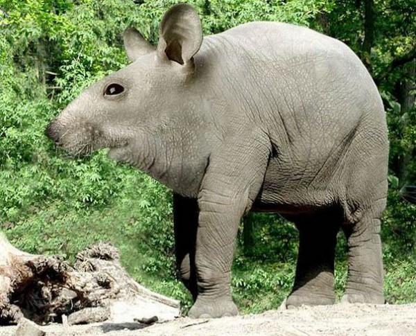 несуществующие животные Jan Oliehoek