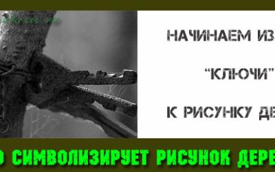 символика-дерева