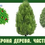 Анализ кроны дерева. Часть 1.