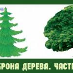 Анализ кроны дерева. Часть 2.